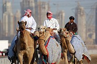 rider, men, camel riders, camel runnings, runnings, camel, camels, races, competition, sports, camel sport, Dubai, Uni