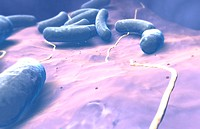 Escherichia coli (thumbnail)