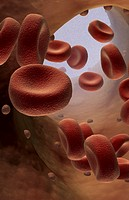 Red blood cells (thumbnail)
