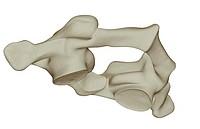 The atlas bone