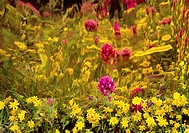 Smudged photo of purple and yellow flowers