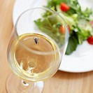 Fly in Glass of White Wine