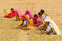 Women working in a field on the road from Khimsar to Jaisalmer, Rajasthan, India