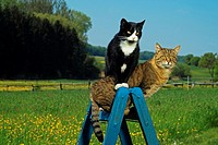 two domestic cats on ladder