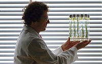 Scientist holding cereal plants grown from tissue cultures inside test tubes