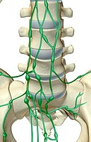 The lymph supply of lumbar vertebrae