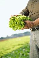 Farmer holding coral lettuce