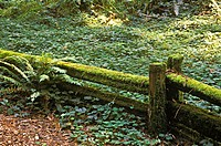 A moss covered fence in a forest