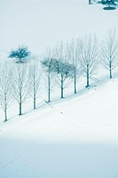 Row of trees in snowy landscape, high angle view