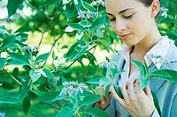 Businesswoman looking at flowering bush, close-up