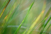 Blades of grass, close-up