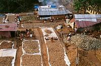 aerial view of broken coconuts lord ayyappa temple , sabarimala , kerala , india