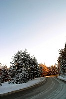 A road through the Snowy forest, Brasov, Transylvania, Romania