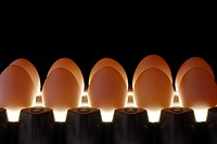 Row of eggs lit from underneath in the dark