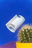 Cactus with a twenty Euro banknote on its spines, close up