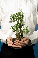 Midsection of businessman holding bonsai