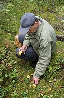 Senior man picking wild mushrooms