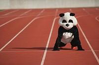 Panda Crouching on a Track