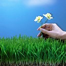Hand Placing Flowers in Grass