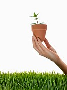 Hand Holding Potted Plant over Grass