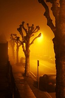 Pollarded trees in fog