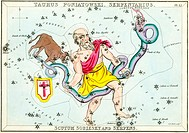 Taurus Poniatovii constellation  Illustrated card from a 19th century astronomical teaching aid called Urania´s Mirror, after the Greek muse of astron...