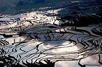 Rice paddy. Yunnan. Yuanyang. China