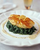 Monkfish on herb puree
