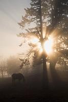 Sunlight through trees on a farm