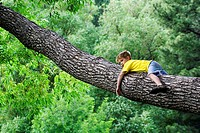 A caucasian boy, 5-10, rests in the branch of a large tree.