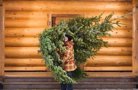 Teenage Boy Carrying Christmas Tree