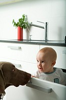 Baby sitting in drawer, being sniffed by dog
