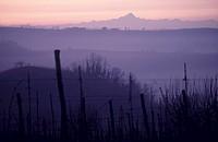 Langhe wine-growing area, Piedmont, Italy