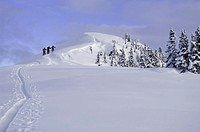 Backcountry skiers climbing to summit, rear view