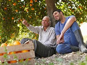 Senior father and son sitting in orange orchard, smiling