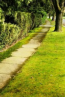 Sidewalk, trees and hedge besides