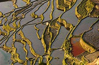 Abstract look of rice paddy dikes at Yuanyang, Yunnan Province, China