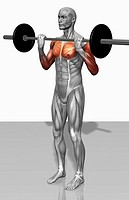 Biceps curl Part 1 of 2 (thumbnail)