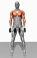 Upright row exercise Part 2 of 2
