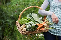 Woman holding vegetable basket mid section close_up