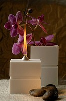 Oil lamp and orchid blossoms