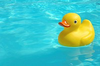Yellow rubber duck in the water