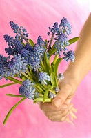A bunch of grape hyacinths