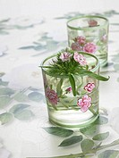 Sweet william in glasses with a flowery pattern