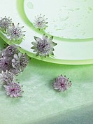 Blossoms on a green plate