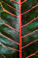 Leaf, close up