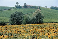 Italy - Piedmont Region - Casale Monferrato - Countryside