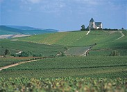 France - Champagne - Surroundings of Epernay, vineyards