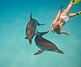Snorkeler Swimming With Wild Dolphins