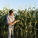 Farmer Holding Cobs of Corn